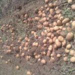 بازار سیب زمینی