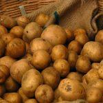 فروش سیب زمینی