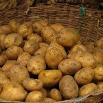بازار فروش سیب زمینی